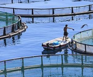 Θεσπρωτία: Στα…κάγκελα οι Υδατοκαλλιεργητές Θεσπρωτίας λόγω εγκατάστασης μονάδας αποθήκευσης και διακίνησης υγρών καυσίμων στην Λωρίδα Σαγιάδας