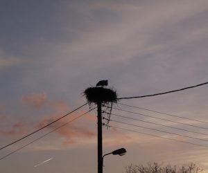 Θεσπρωτία: Οι πελαργοί κατέφθασαν στην Κρυσταλοπηγή (+ΦΩΤΟ)