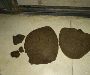Θεσπρωτία: Κατασχέθηκε 1 κιλό κάνναβης στο Ράγιο-Συνελήφθησαν 3 άτομα