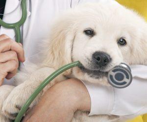 Θεσπρωτία: Ο Αγροτικός Συνεταιρισμός Θεσπρωτίας Πρέβεζας «ΕΝΩΣΗ ΑΓΡΟΤΩΝ»: Ζητείται κτηνίατρος
